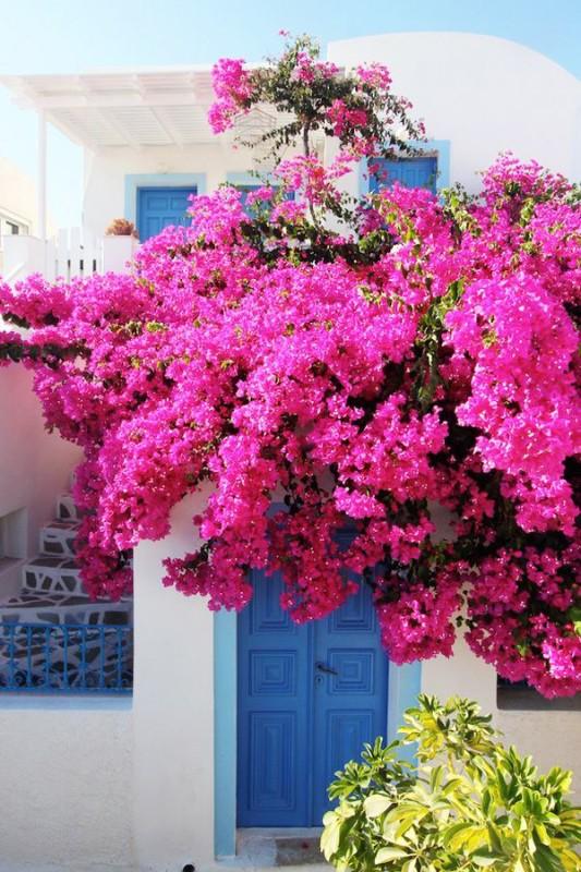Greece Greek Beautiful Pink Travel Santorini Flower Blog