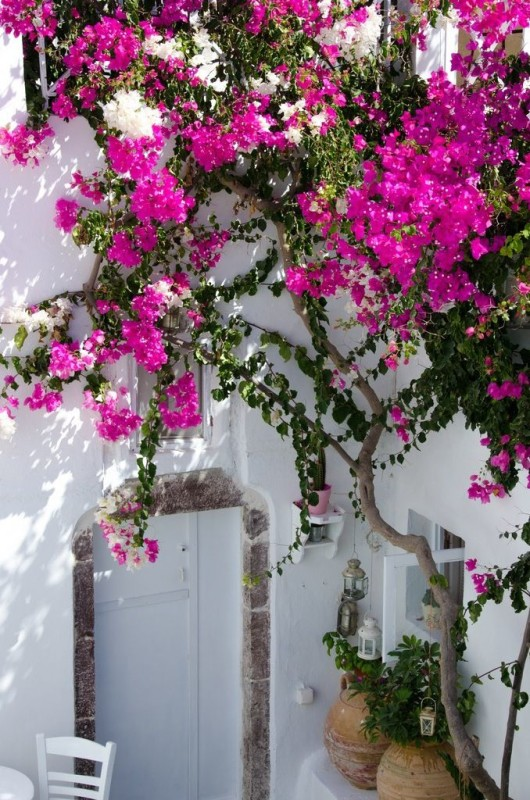 Greece Greek Hotel Beautiful Pink Travel Flower Blog